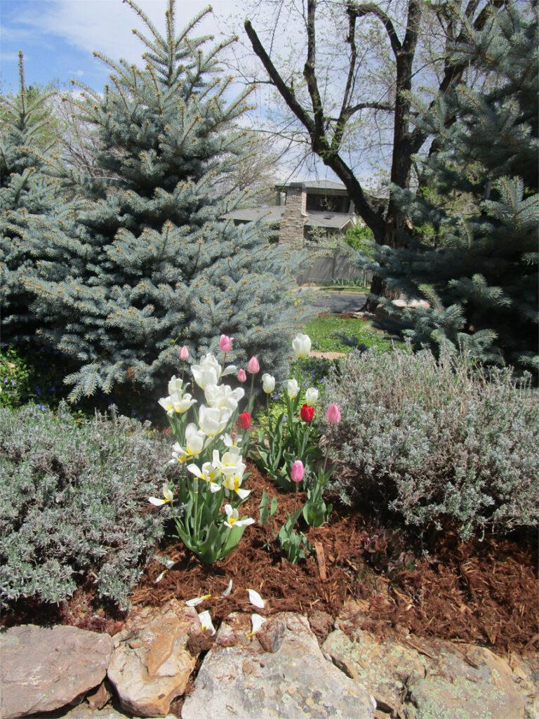 Minger-Three-Garden